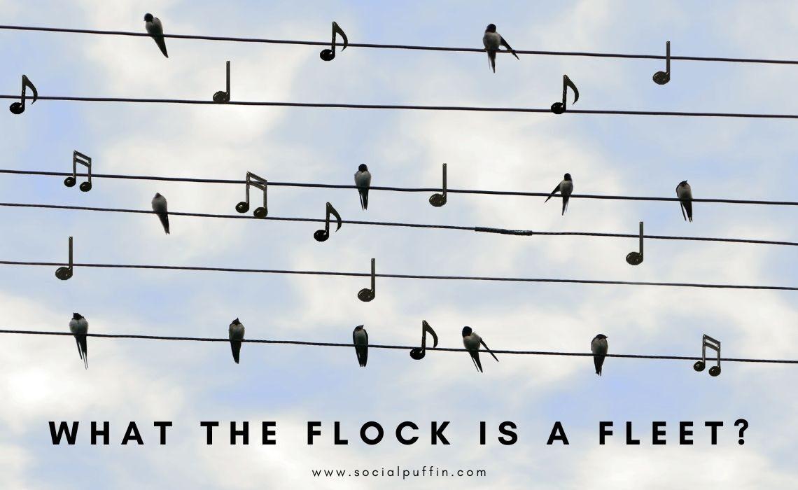 What the Flock is a Fleet
